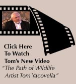 Click Here To Watch Tom's New Video - The Path of Wildlife Artist Tom Yacovella